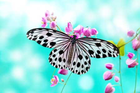 Photo for Close up Rice Paper Butterfly on pink flower - Royalty Free Image