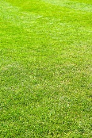 Grass vertical