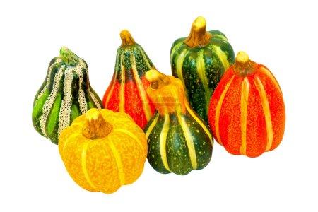 Pumpkin gourds isolated