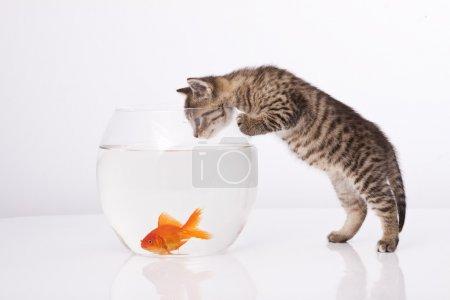 Photo pour Maison chat et un poisson d'or - image libre de droit