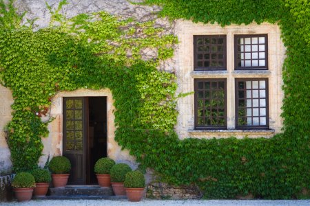 Ivy clad house photographed in the Dordogne region of France