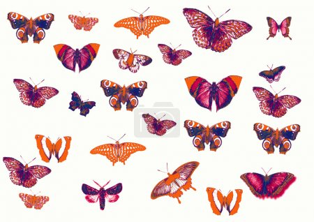 Photo for Set of different butterflies - Royalty Free Image