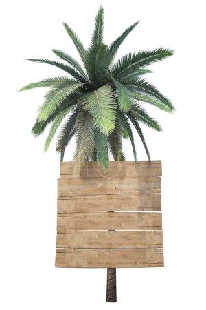 Photo pour Panneaux en bois accrochés au tronc d'une paume. isolé sur blanc . - image libre de droit
