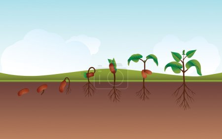 Photo for Plant growing process from seedling to actual growing, also available as files. - Royalty Free Image