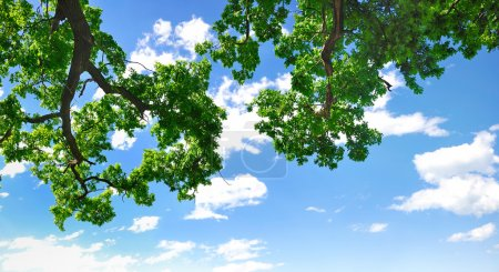 Summer branch with blue sky and clouds, copyspace
