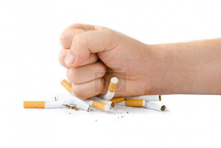 Photo for Male fist with many cigarettes isolated on white - Royalty Free Image