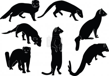 Mongoose collection illustration - vector...