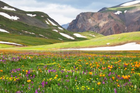 Photo for Mountains meadow - Royalty Free Image