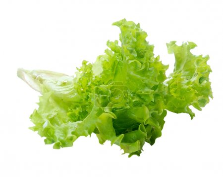 Photo for Green salad lettuce with a root on a white background - Royalty Free Image