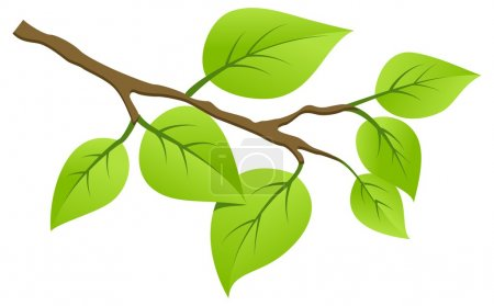 Illustration for Tree branch with young saplings. Vector illustration, isolated on a white. - Royalty Free Image
