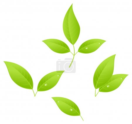 Tea leaves, young saplings. Vector illustration, i...