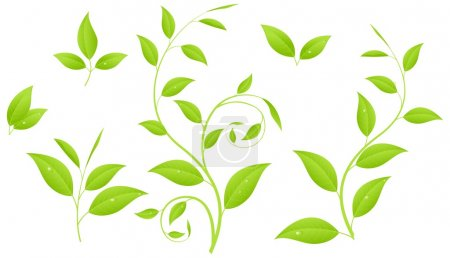 Illustration for Set of various green plants, young saplings. Vector illustration, isolated on a white. - Royalty Free Image
