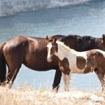 Horse family. Wild life nature...