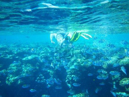 Photo pour Seul plongeur nage sous l'eau avec poisson - image libre de droit
