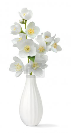 Photo for Small vase with jasmin isolated on white - Royalty Free Image