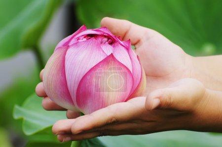 Elegant Lotus flower in hand