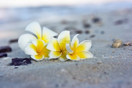 Photo pour Temple arbre fleurs couché sur la plage - image libre de droit