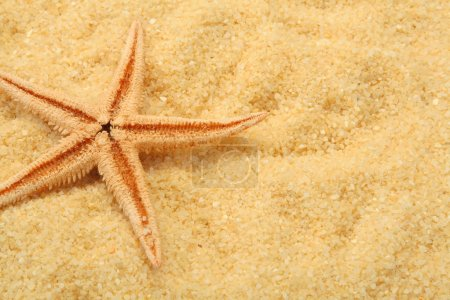 Starfish and beach sand