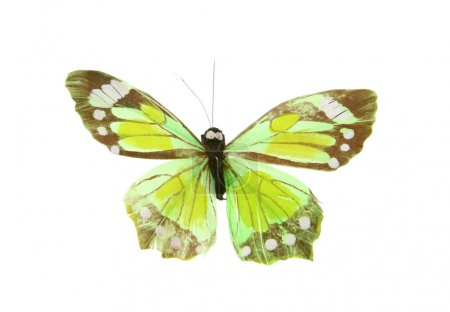Artificial butterfly on white