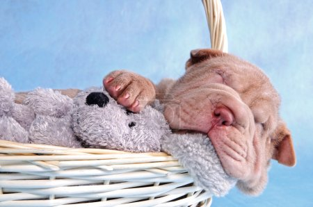 Puppy Sleeping in Basket