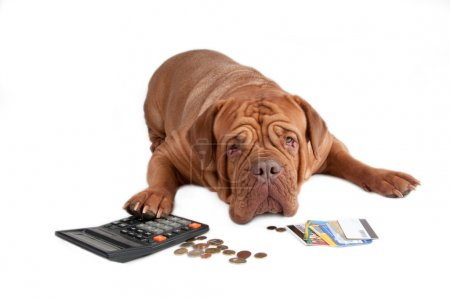 Dog with calculator, cents and credit cards