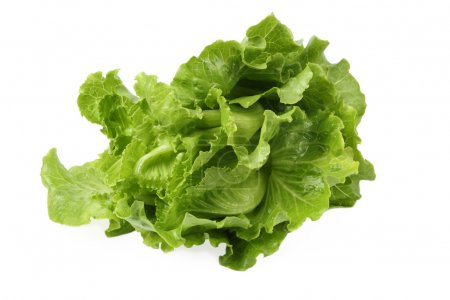 Photo for A green fresh lettuce isolated with white background - Royalty Free Image