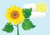 Sunflower with ladybugs vector illustration