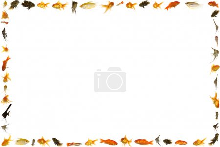 Fish frame isolated on white background