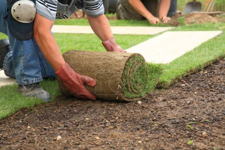 Photo for Man laying sod for new garden lawn - Royalty Free Image