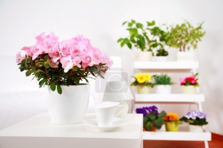 Foto de Detalle interior con diversas flores en tono blanco - Imagen libre de derechos