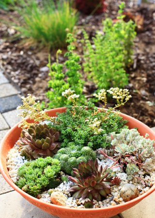 Beautiful rock garden cultivated in small basin or roof gardening