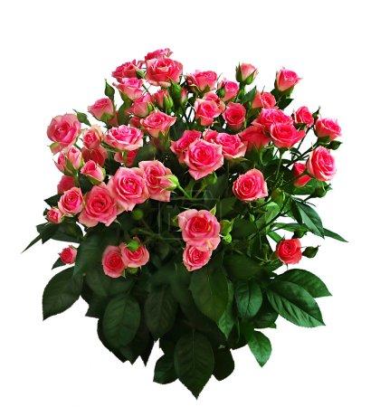 Photo pour Bouquet romantique de roses, isolé sur fond blanc - image libre de droit