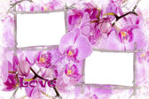 Two bamboo frames with orchids