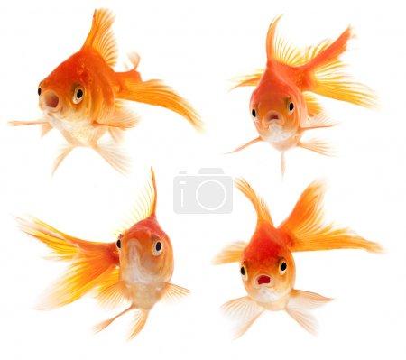 Surprised looking fish