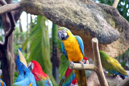 Photo for Parrots living freely in tropical forest in Park of birds. Singapore. - Royalty Free Image