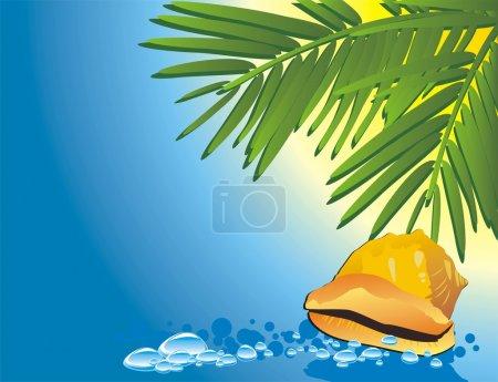 Cockleshell among the water and palm