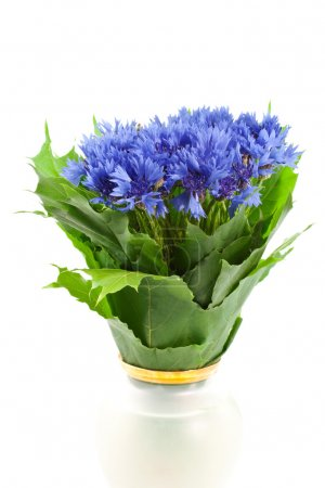 Photo for Blue cornflower bunch in vase isolated on white background. vertical shot - Royalty Free Image