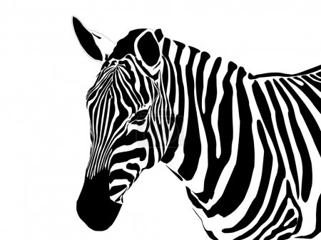 Illustration for Vector close up portrait of a zebra - Royalty Free Image