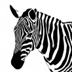 Vector close up portrait of a zebra...