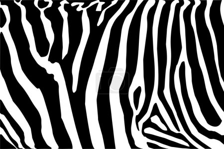 Illustration for Vector - zebra body texture Black and White - Royalty Free Image