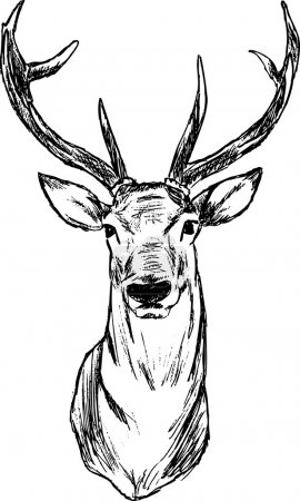 Illustration for Vector - Deer - hand draw , isolated on background - Royalty Free Image