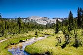 High Sierra Stream