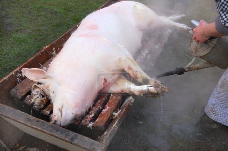 Pig being killed by a butcher