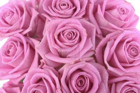 Bouquet of pink roses over white background