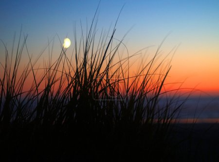 Ocean Moonrise silhouetted with beach grass