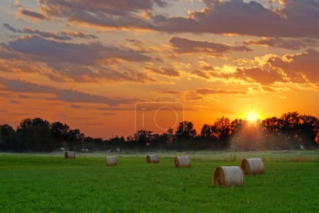 Sun setting on hay field with green grass...