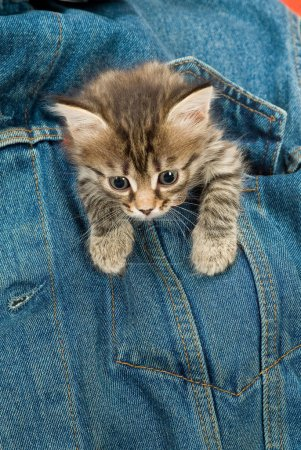 Kitten And Denim