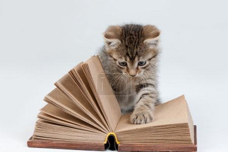 Photo for Little kittens sitting near an old book - Royalty Free Image