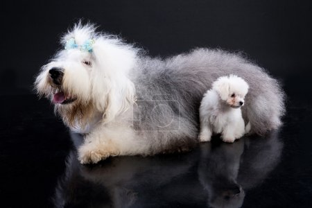 Fluffi Dogs