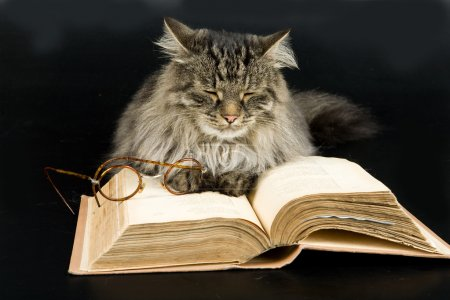 Photo for Fluffi Siberian cat, glasses and book - Royalty Free Image